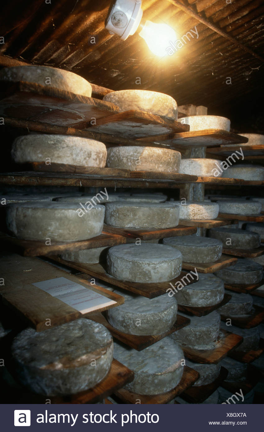 Cheeses from La Chartreuse in maturing cellar - Stock Image