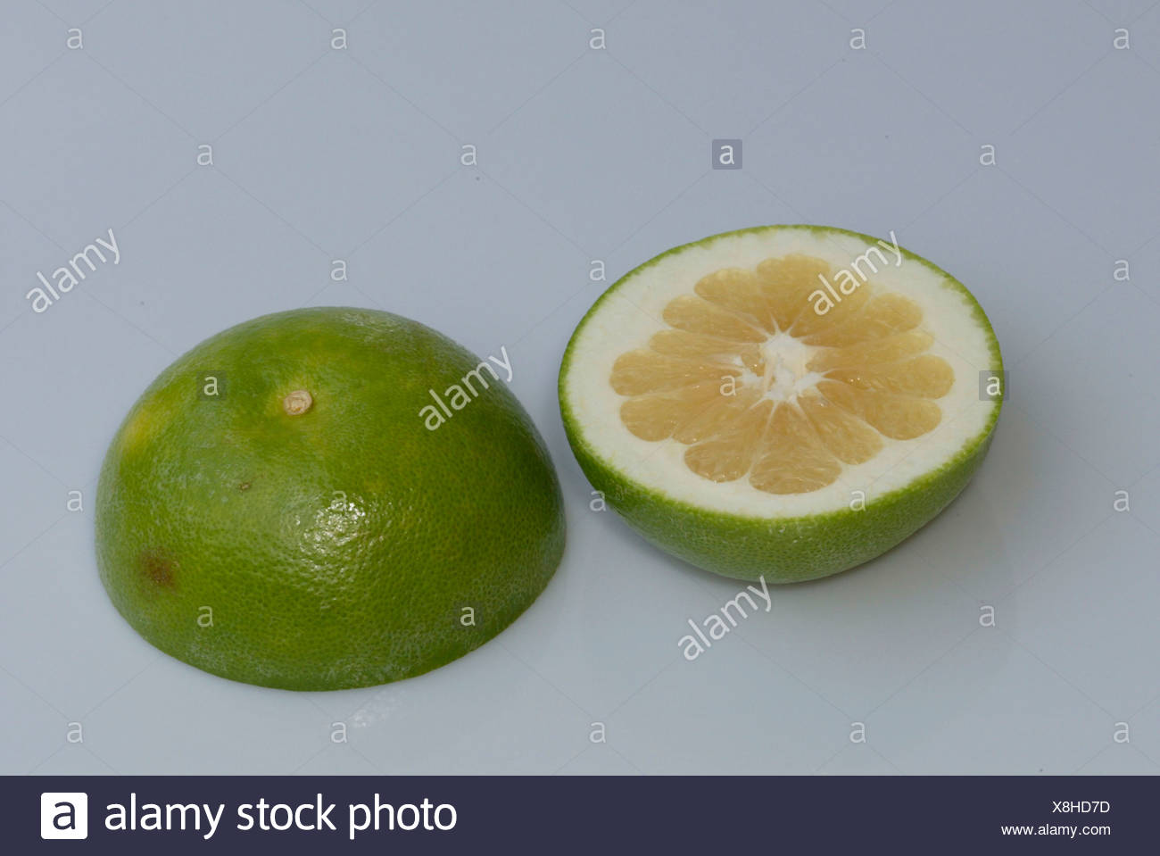 Grapefruit / Pampelmuse Stock Photo
