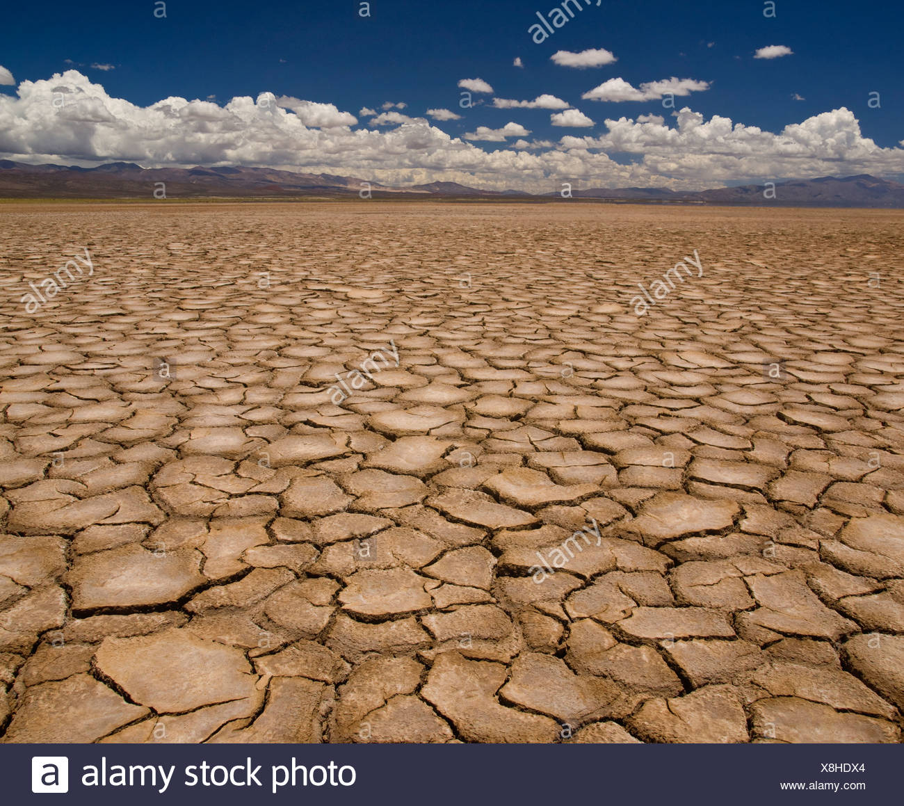 Large field of baked earth after a long drought. Stock Photo
