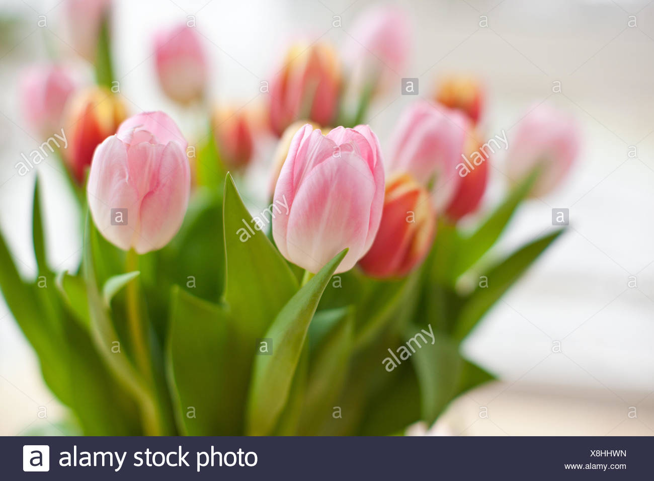 tulpen in vase stock photos tulpen in vase stock images. Black Bedroom Furniture Sets. Home Design Ideas