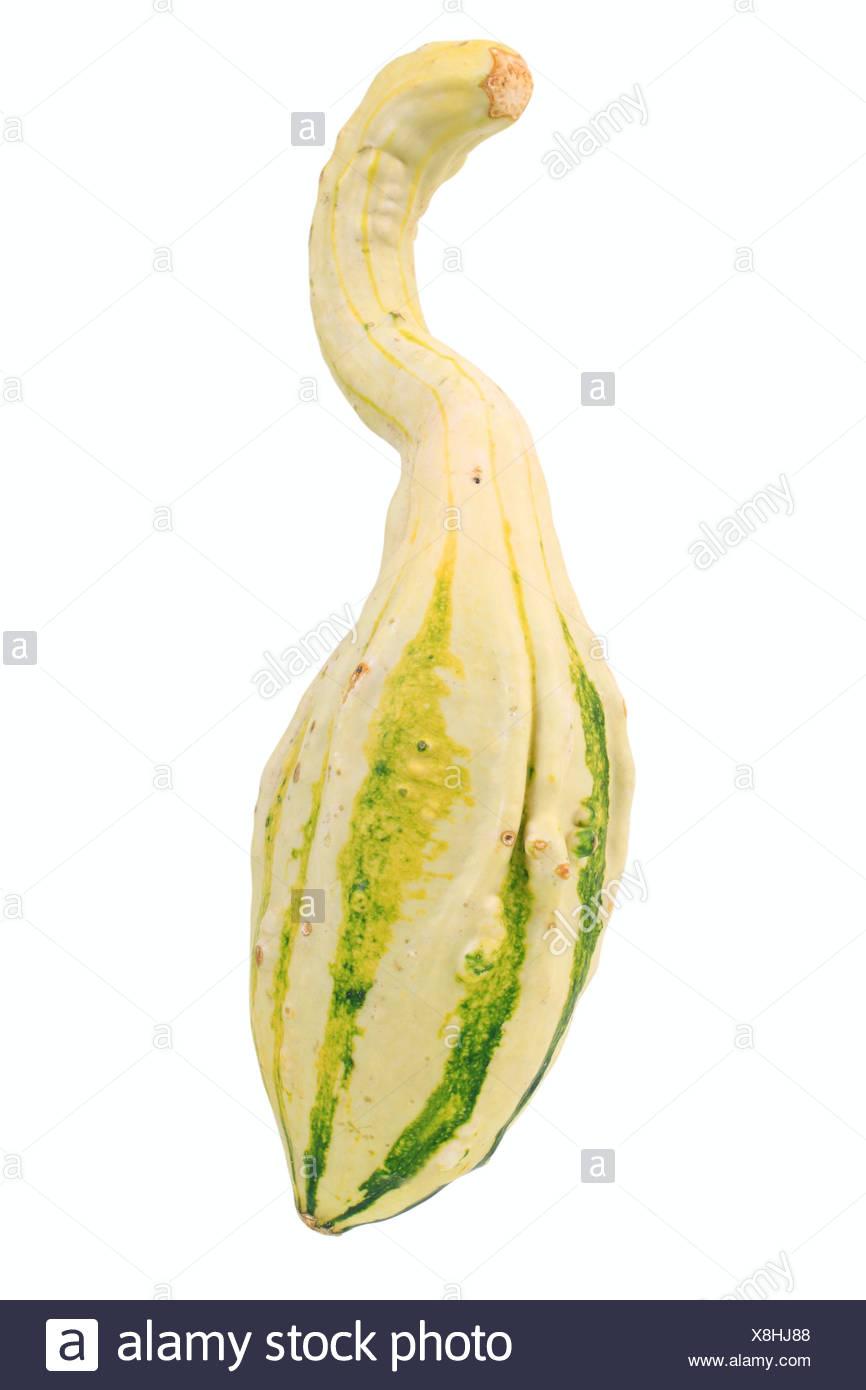 Gourd, Autumn Wings, bottleneck pumpkin - Stock Image
