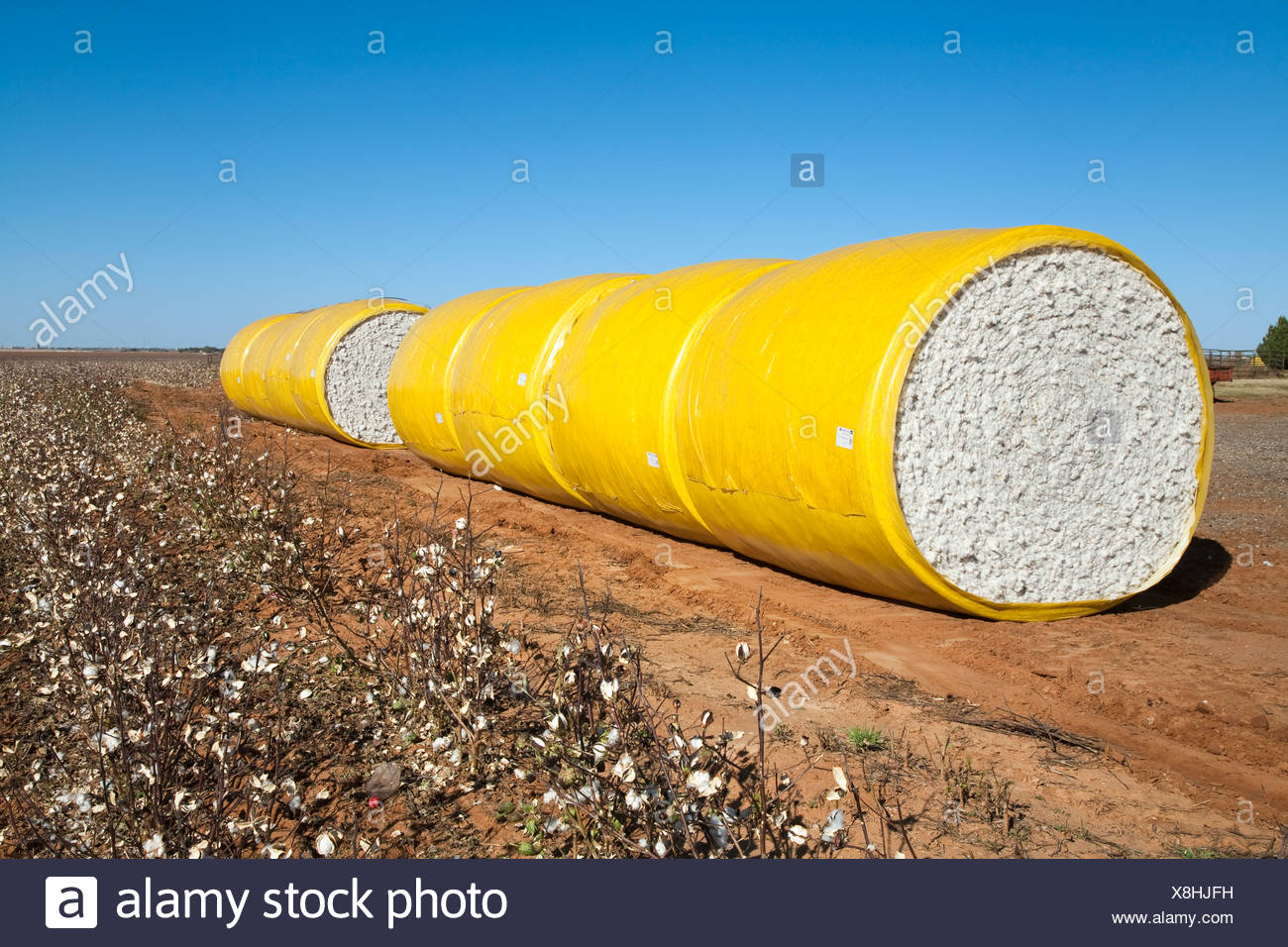 Round mini modules of harvested cotton lined up along a field turnrow / near England, Arkansas, USA. - Stock Image