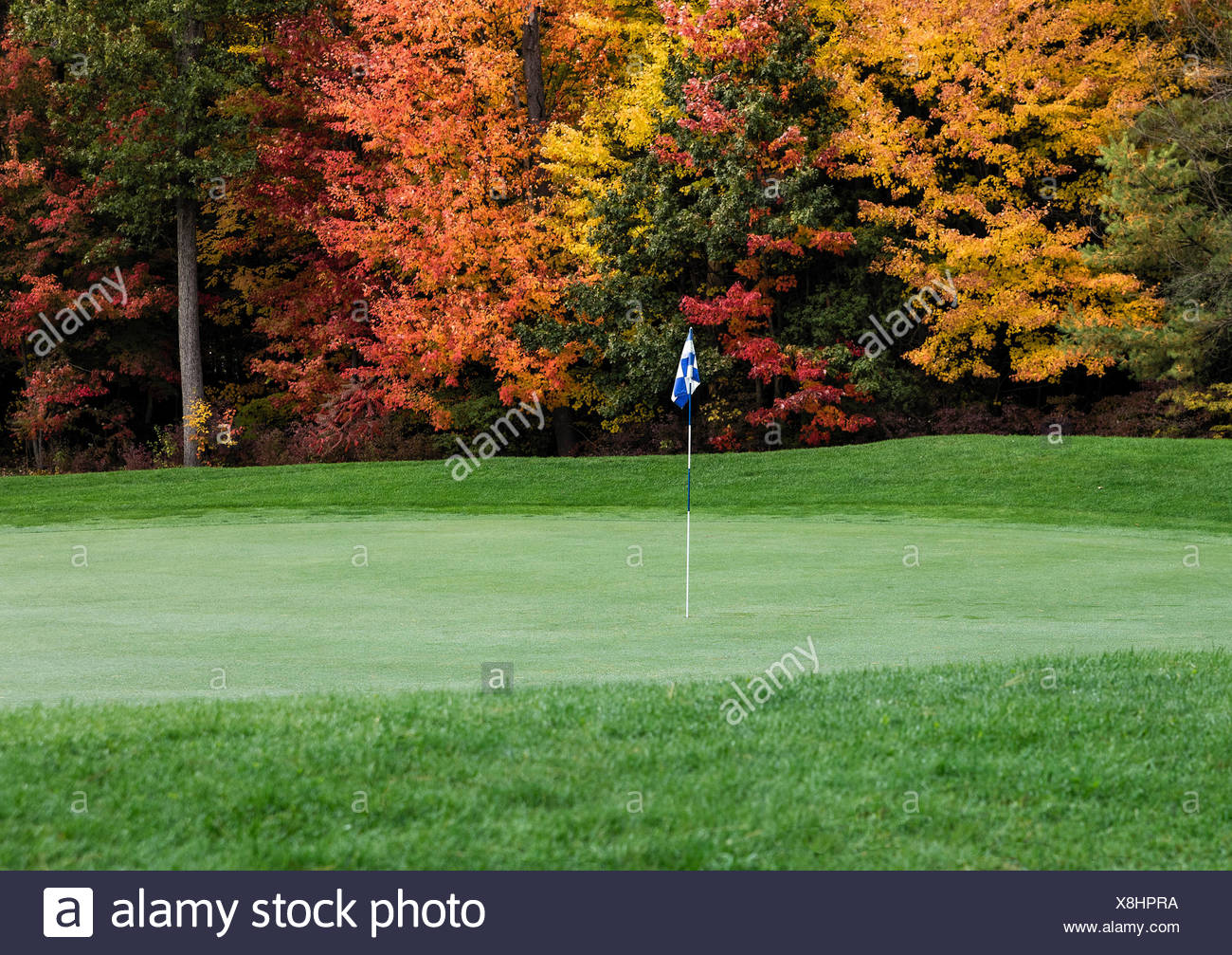 Golf course putting green with autumn foliage. - Stock Image