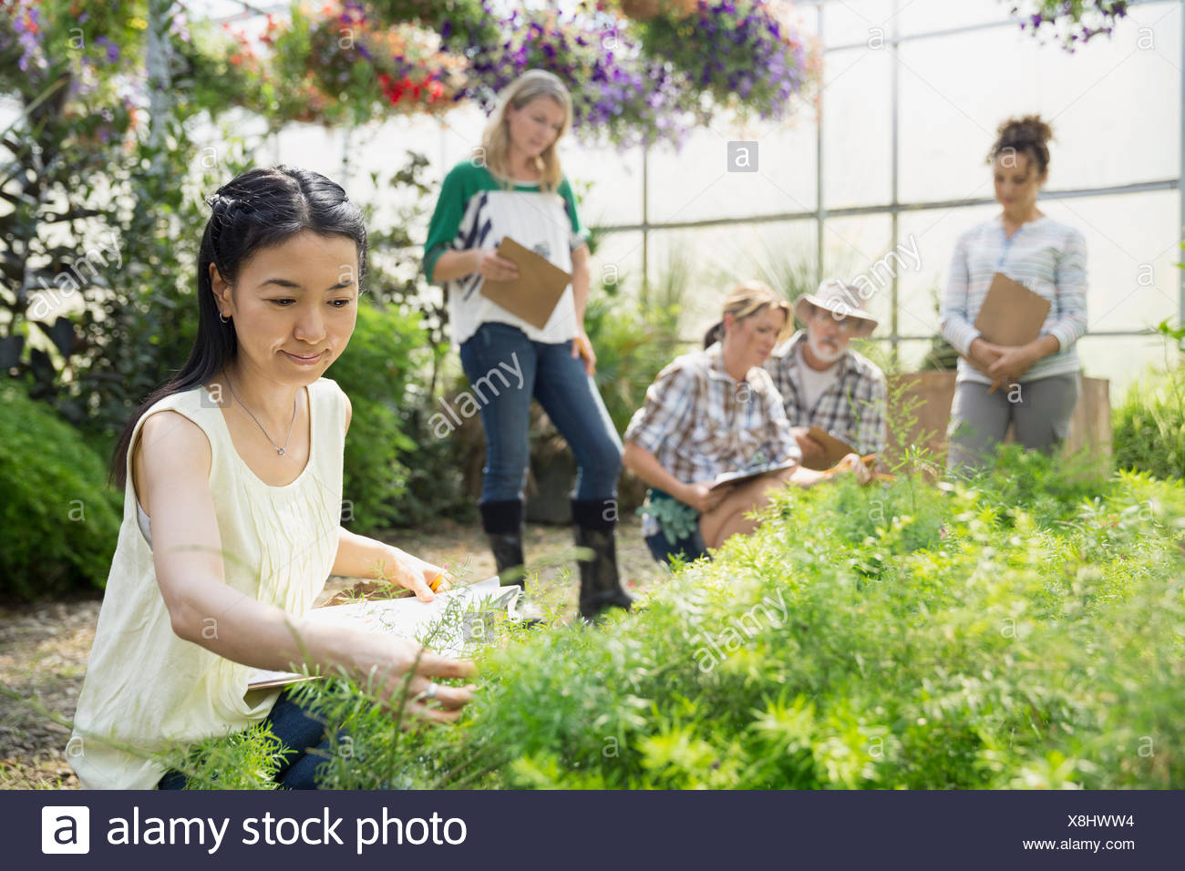 Workers examining plants in greenhouse - Stock Image