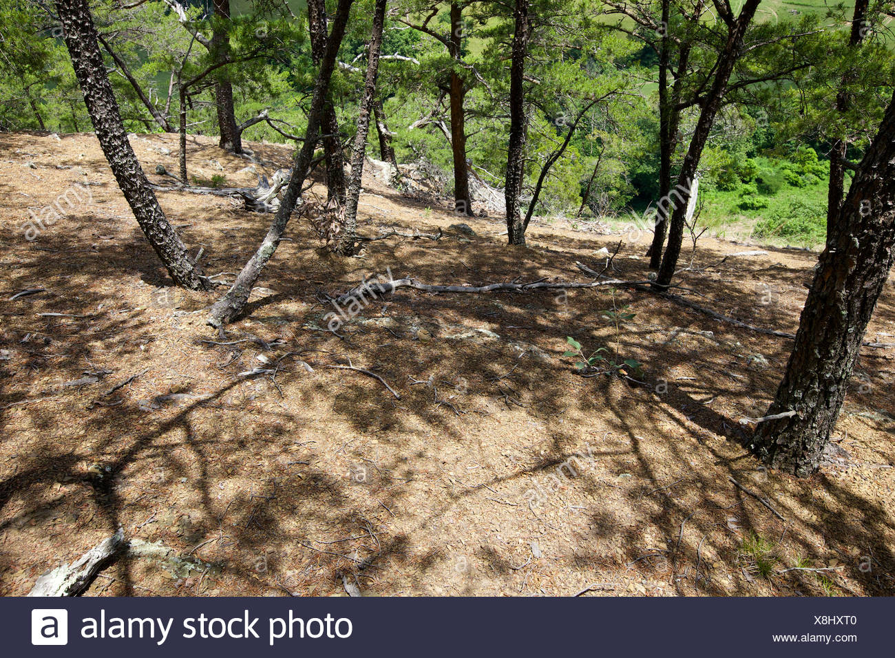 The shale barrens ecosystem, a unique harsh ecosystem with stunted trees, occurring on steep slopes with a southern or western aspect. - Stock Image