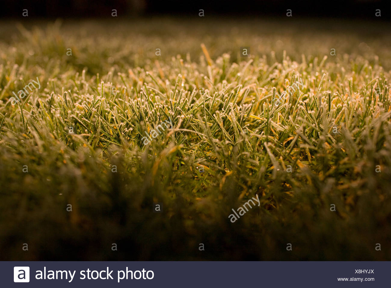 Frost on grass, close up - Stock Image