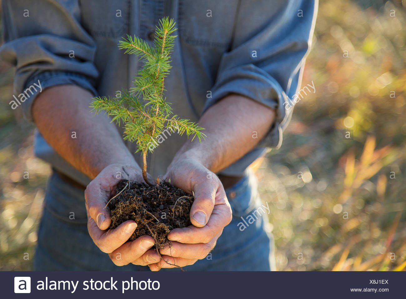 Man cupping tree sapling - Stock Image