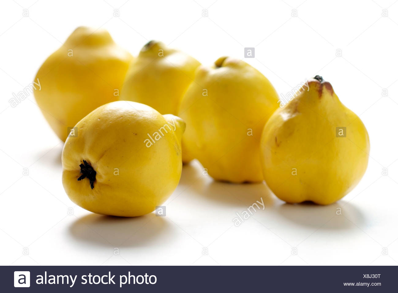 Five whole quinces - Stock Image