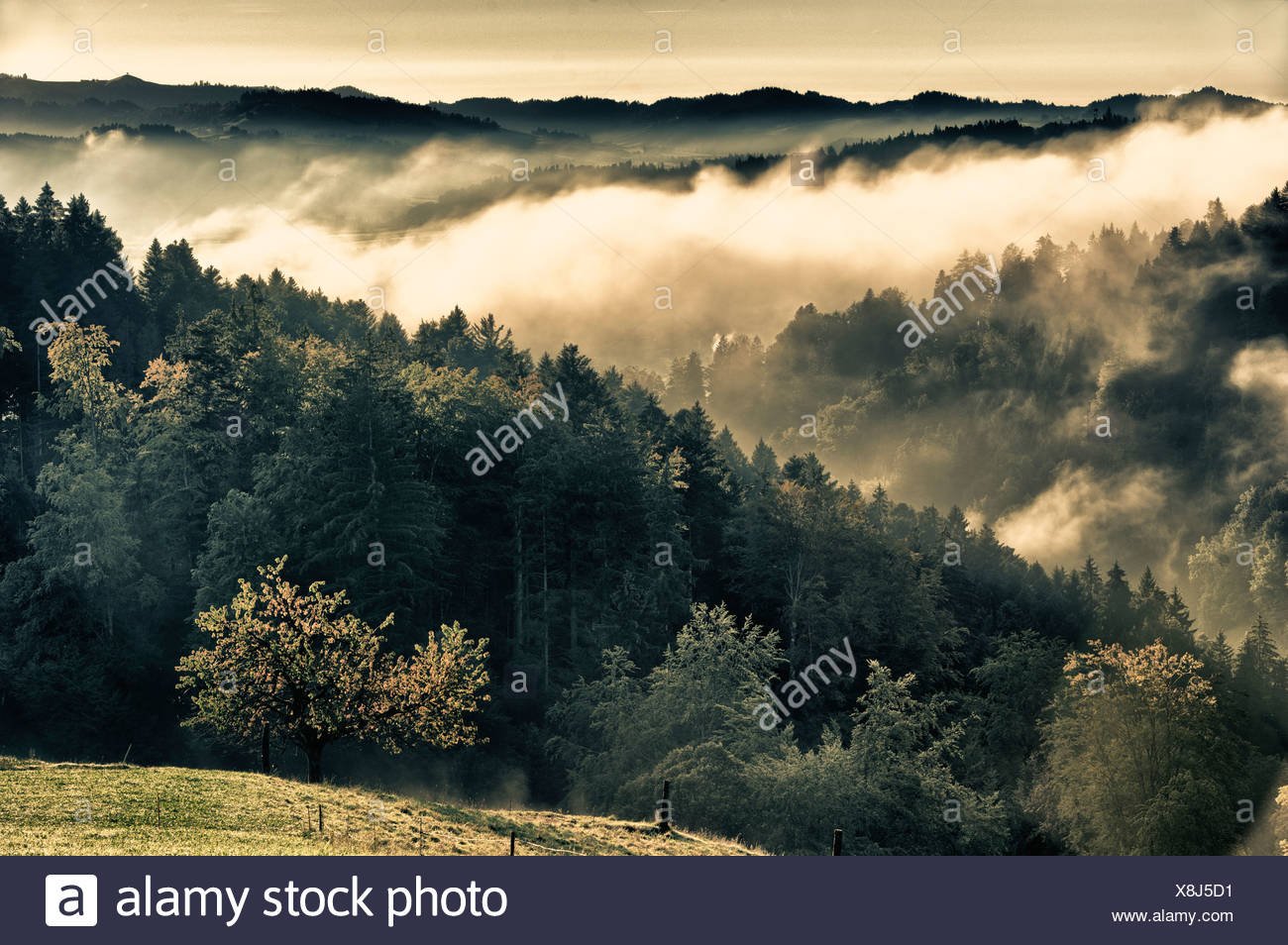 mountain forest, Emmental, autumn, fall, canton Bern, landscape, scenery, early morning fog, mist, fog patches, waft of mist, wa - Stock Image