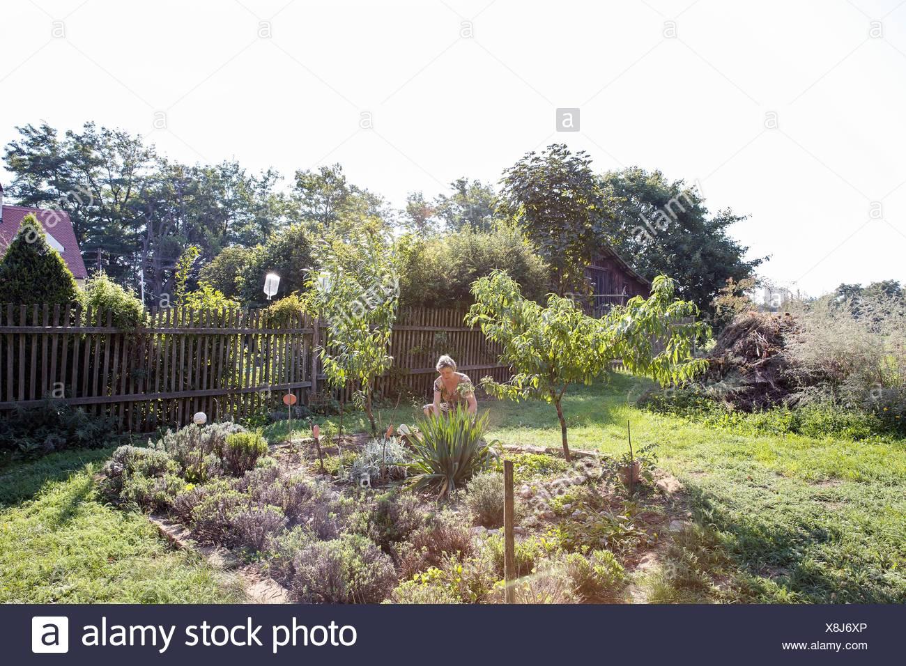 Mature woman gardening - Stock Image