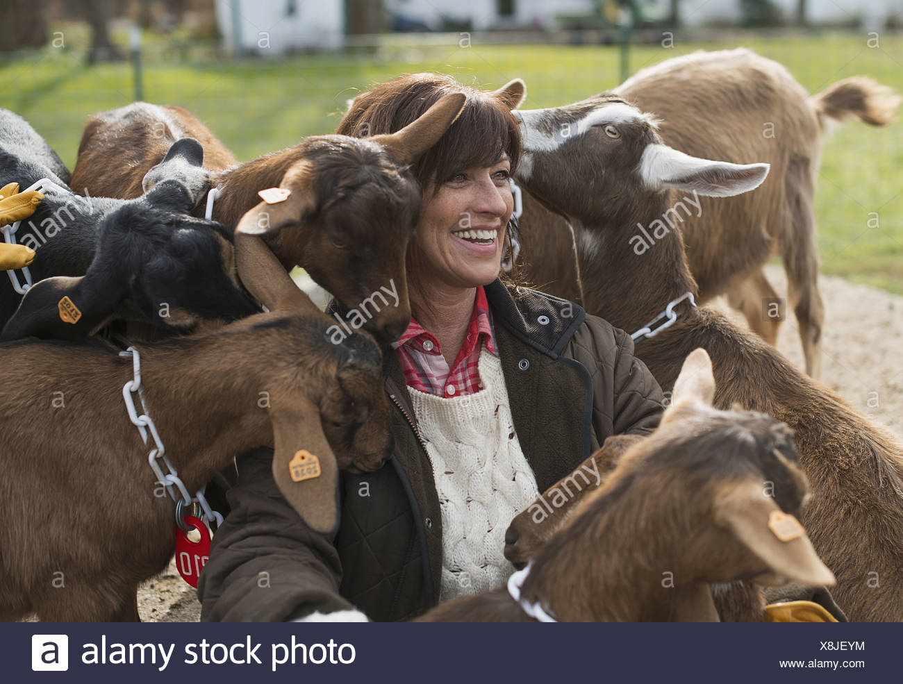 Farmer working and tending to the animals - Stock Image