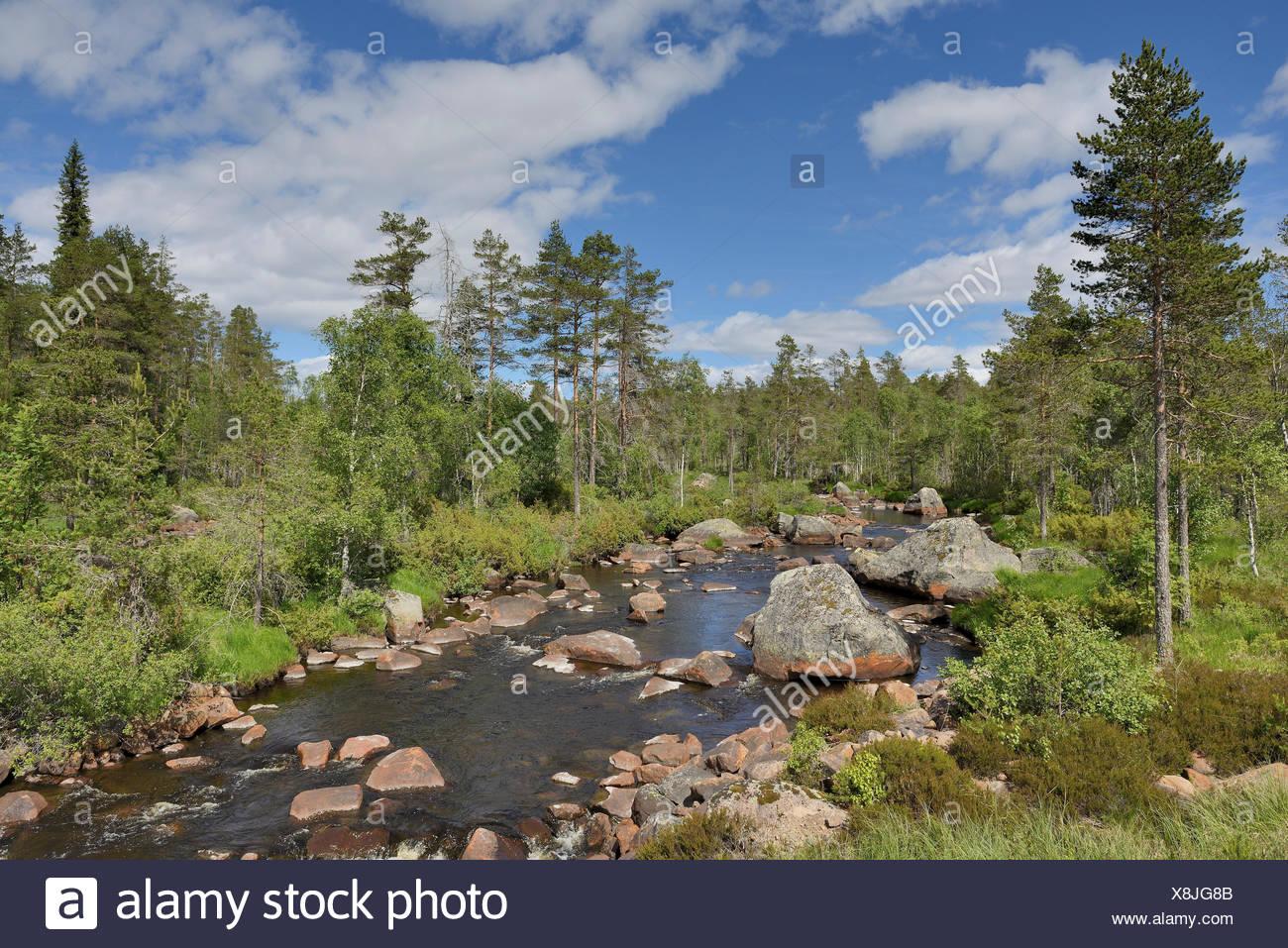 The river Foskan in the province of Dalarna with rocks, Sweden, Dalarna, Långfjällets Naturreservat - Stock Image