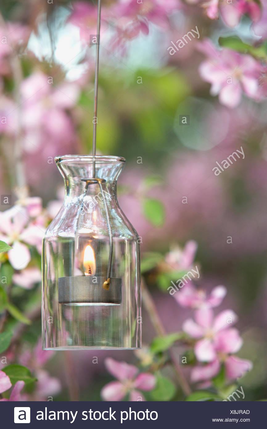 Tea light hanging near blooming tree - Stock Image