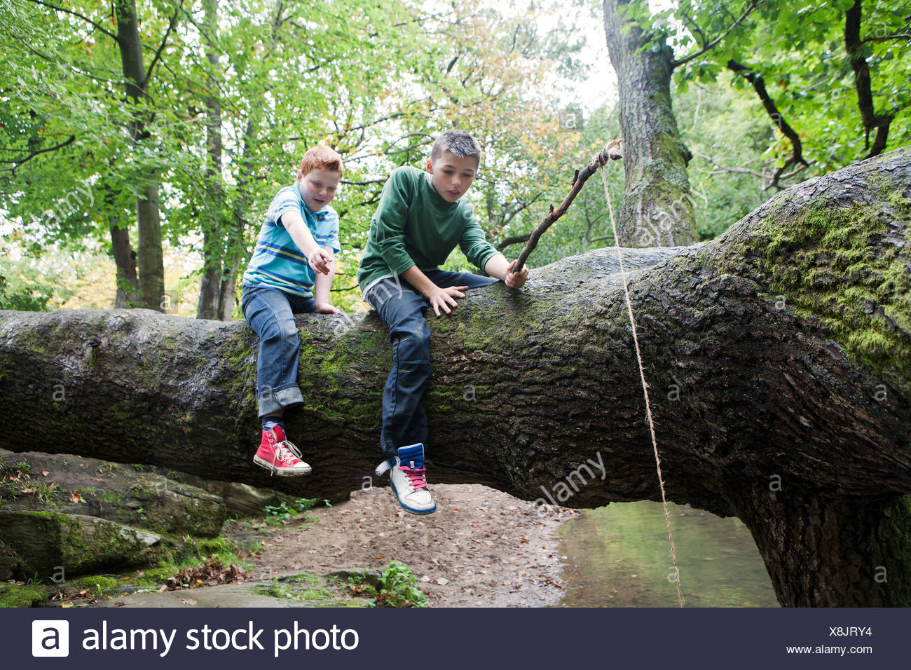 Boys fishing from a fallen tree - Stock Image