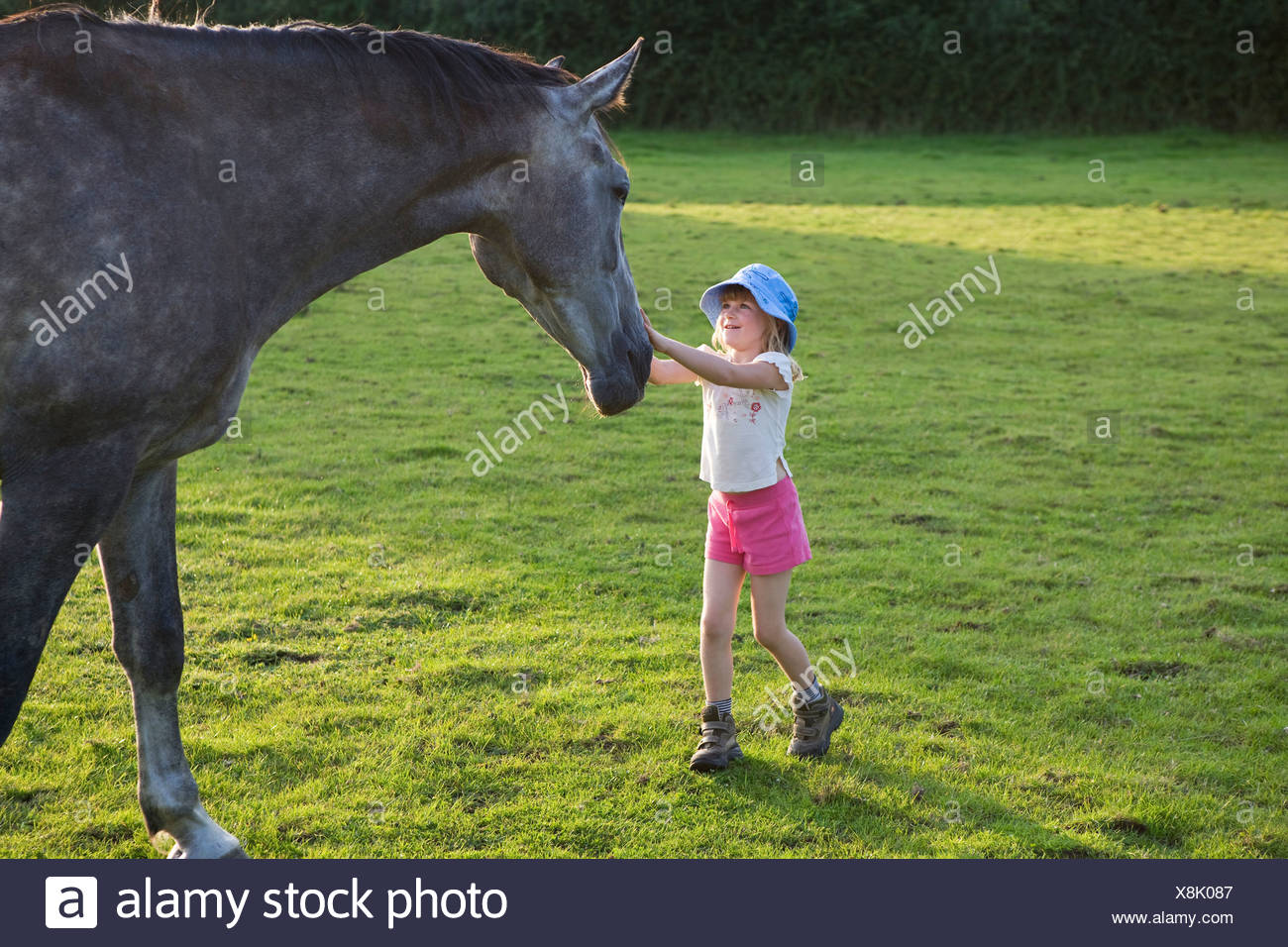 Petting the horse - Stock Image