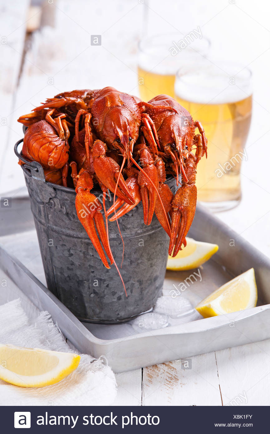 Red lobsters with beer on white background - Stock Image