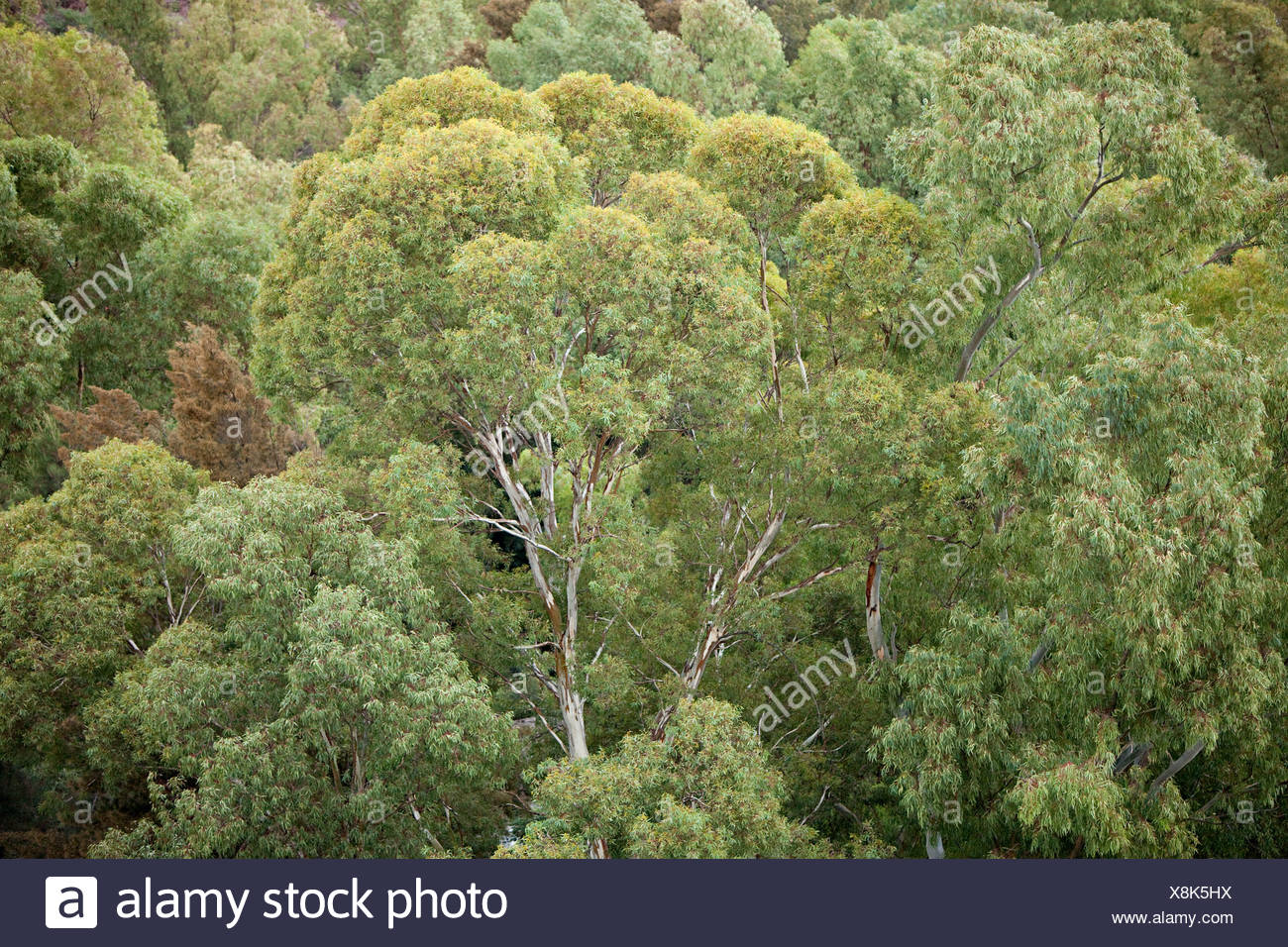 Aerial view of forest - Stock Image