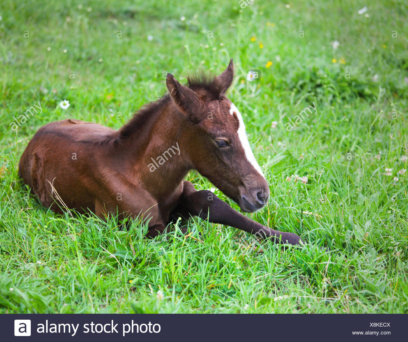 Newborn Baby Horse On The Green Grass Stock Photo Alamy