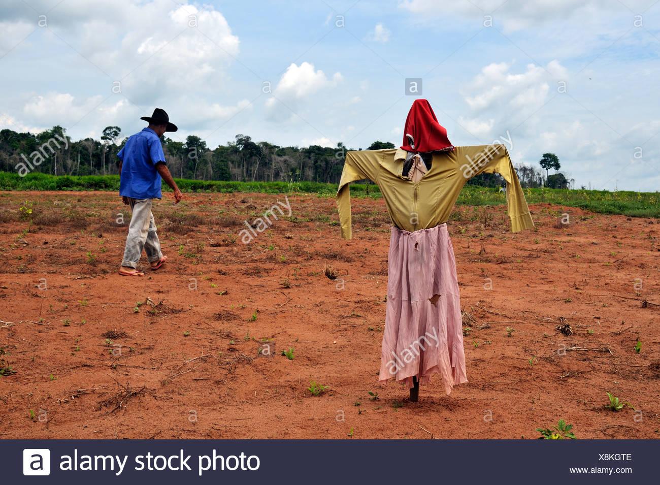 Scarecrow in a field owned by a peasant farmer, Acampamento 12 de Otubro landless camp, Movimento dos Trabalhadores Rurais sem - Stock Image