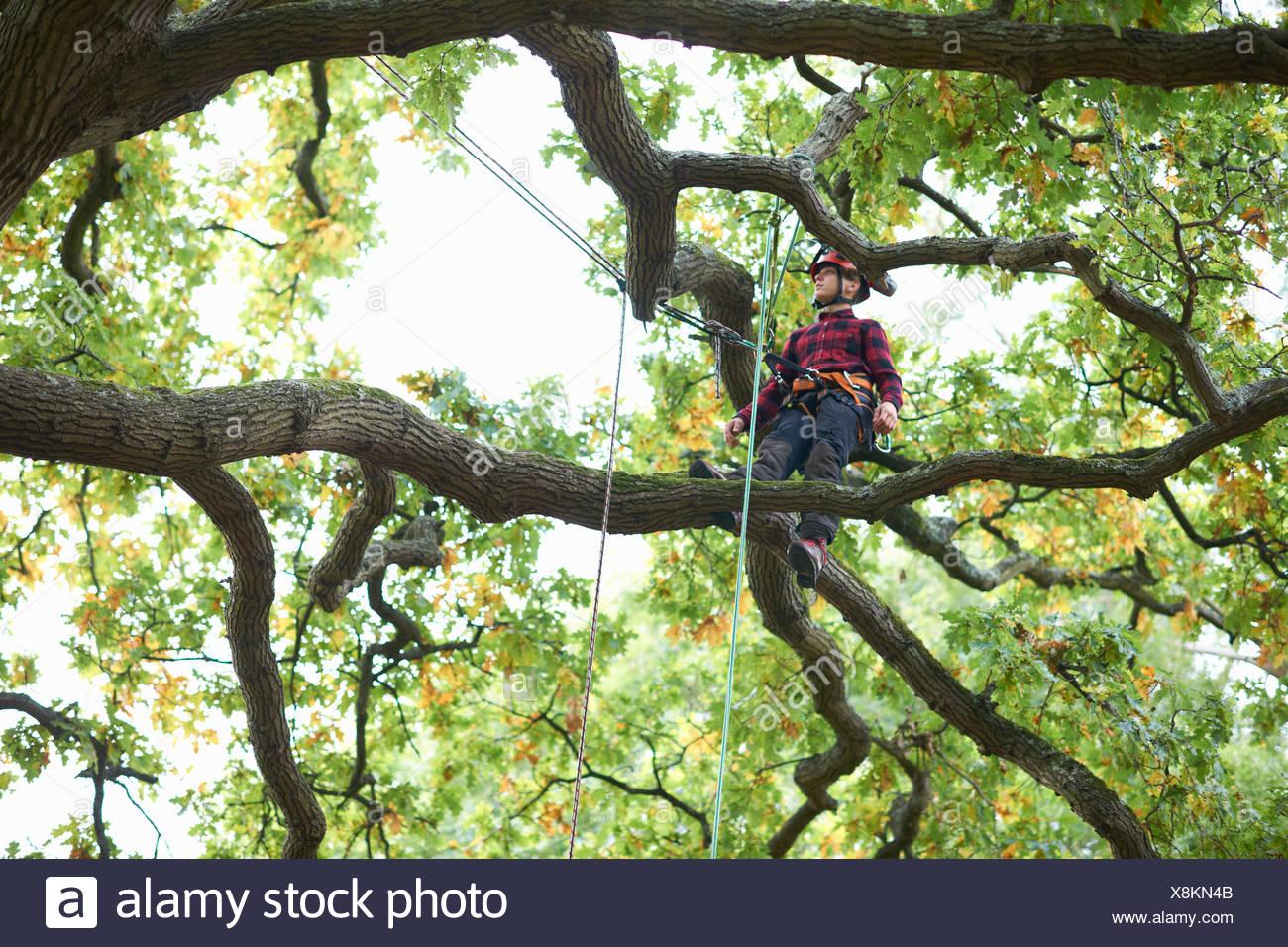 Trainee teenage male tree surgeon standing on tree branch Stock Photo