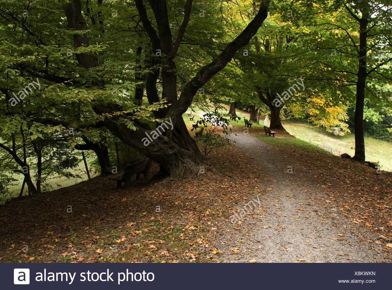 Zurich, Switzerland, on Herbstfaerbung Resiweiher - Stock Image
