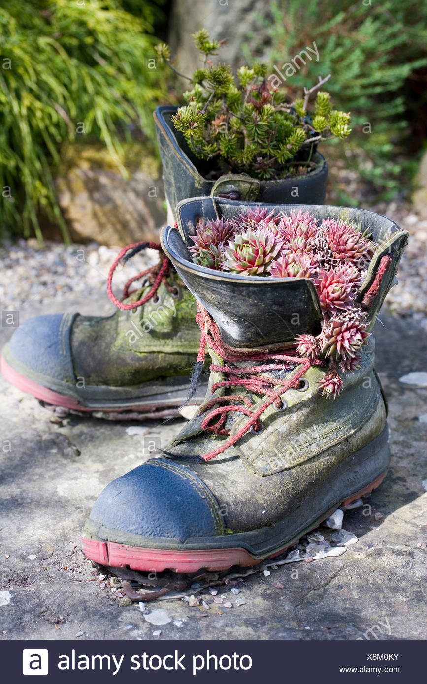 BOOTS AS ALPINE PLANTERS RHS HARLOW CARR YORKSHIRE Stock Photo ... on