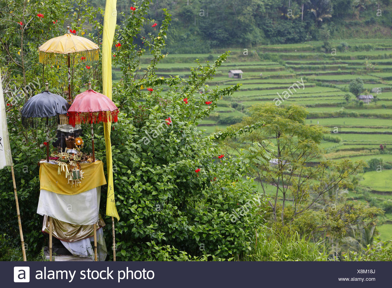 Paddy fields at the Agung volcano, 2567m, Bali, Republic of Indonesia, Asia - Stock Image