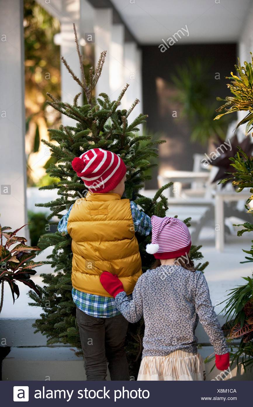 Girl and boy carrying christmas tree - Stock Image