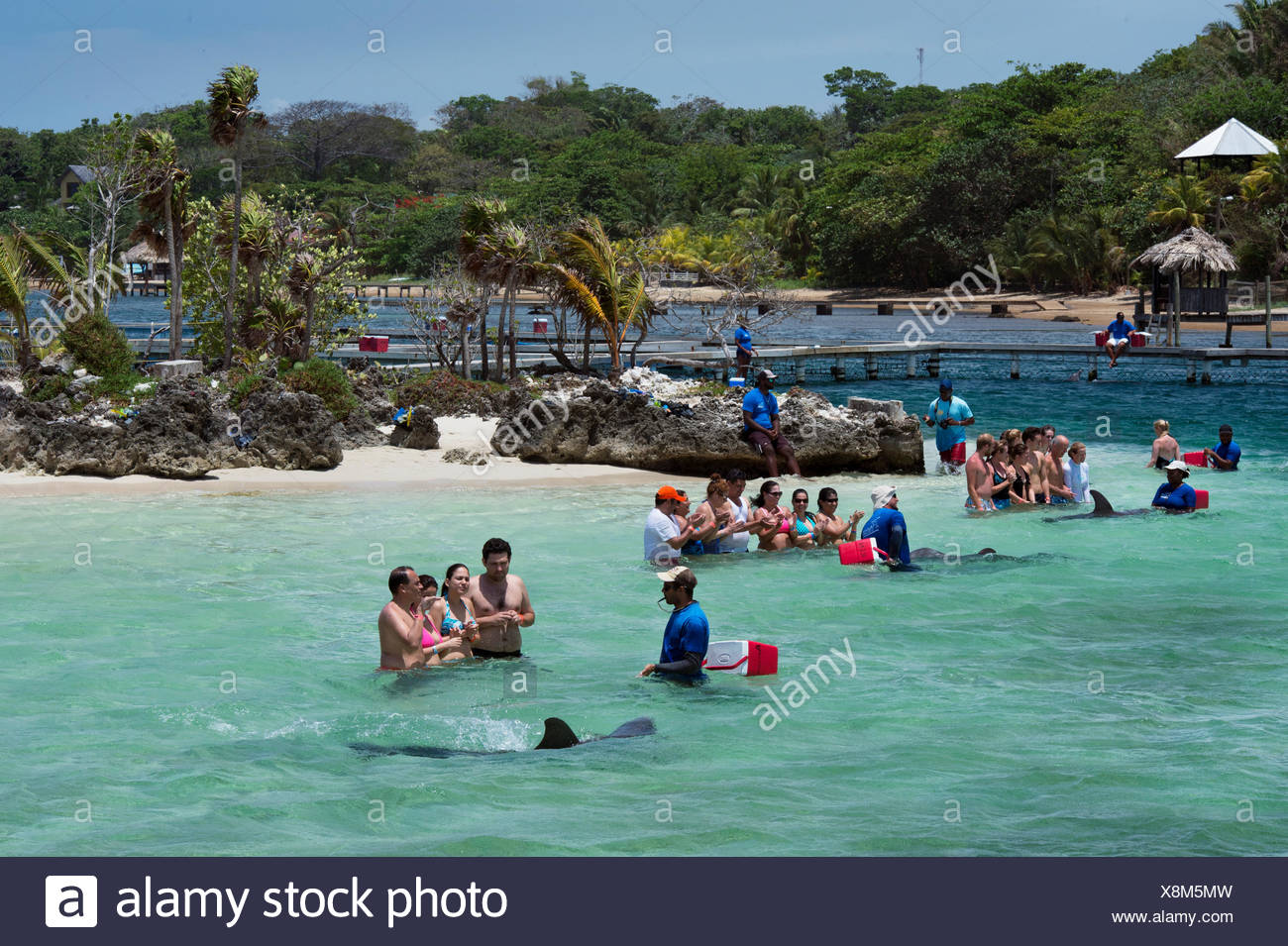 Tourists interact with a bottlenose dolphin at the Roatan Institute for Marine Science at Anthony's Key Resort in Honduras. - Stock Image
