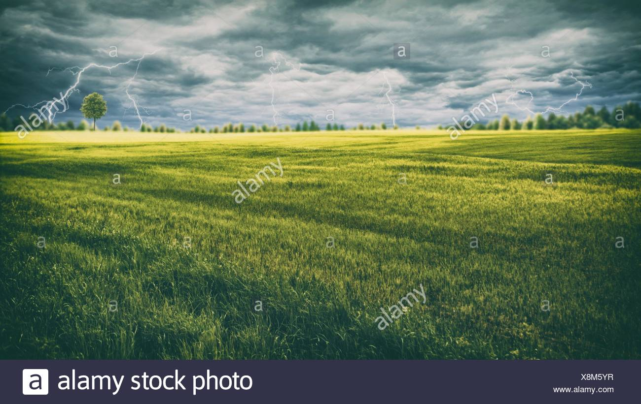 Forces of nature, lighting on the meadow. - Stock Image