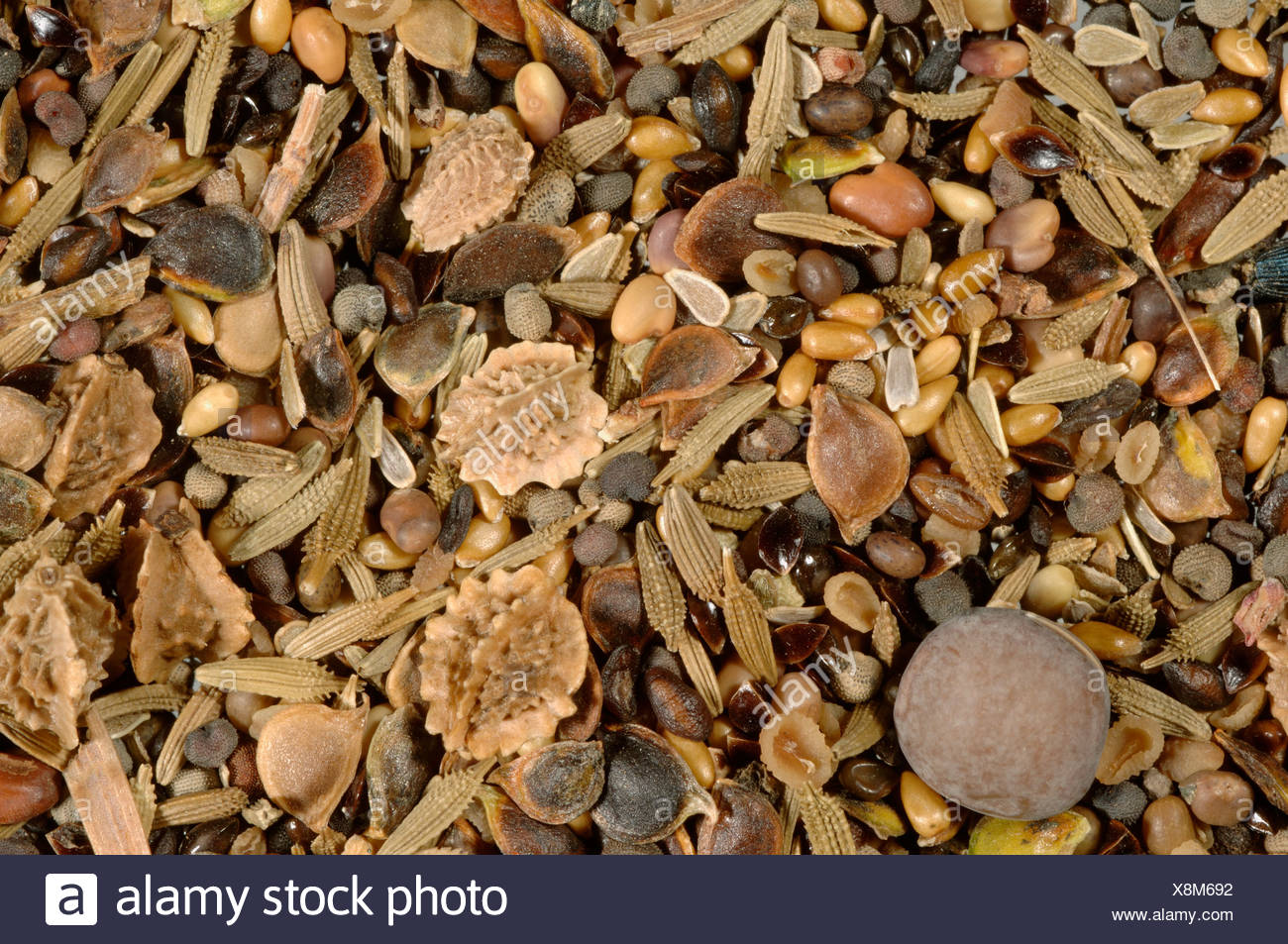 Wildflower seed mix for chalkland soils - Stock Image
