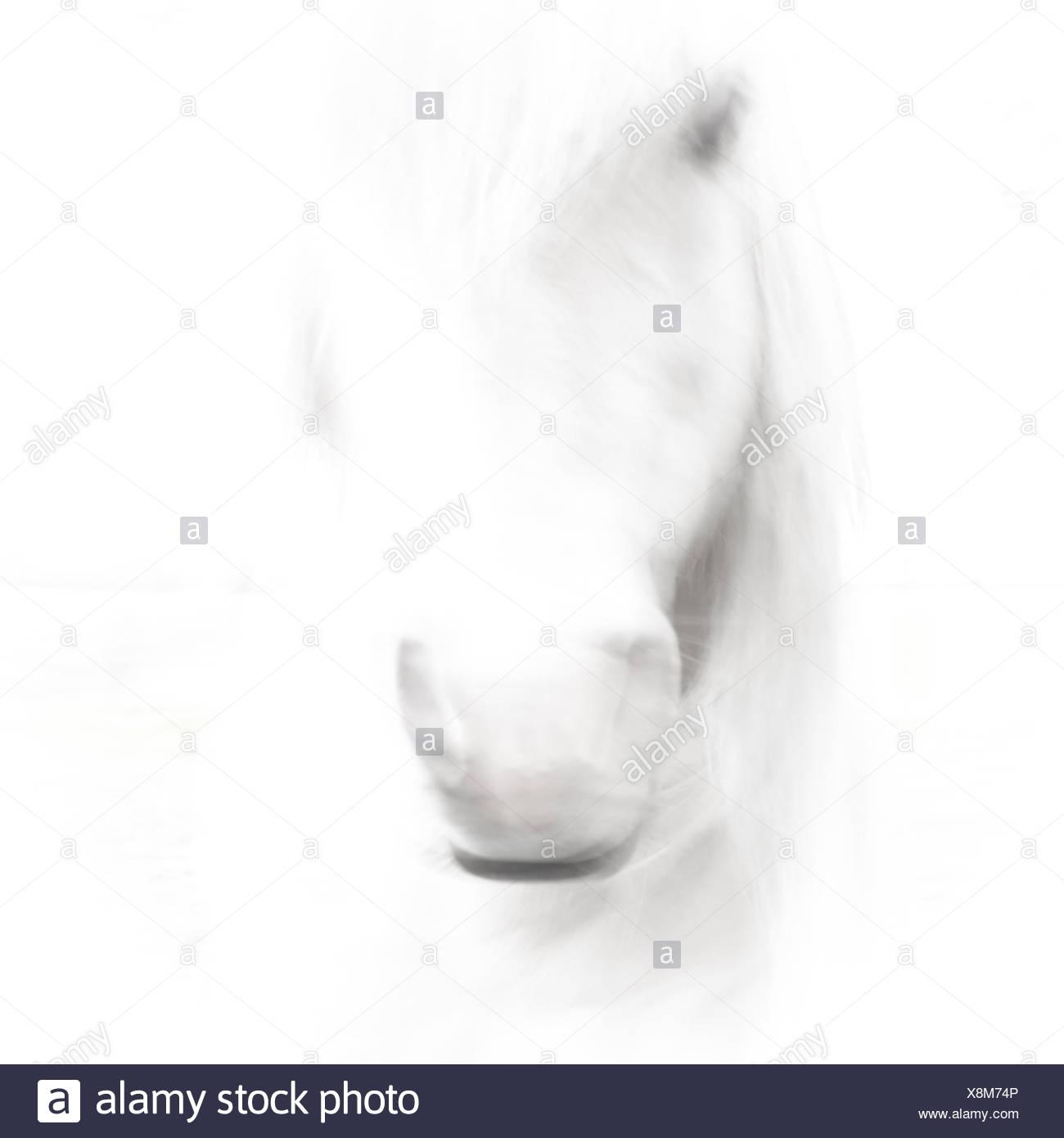 Horse Head high key - Stock Image