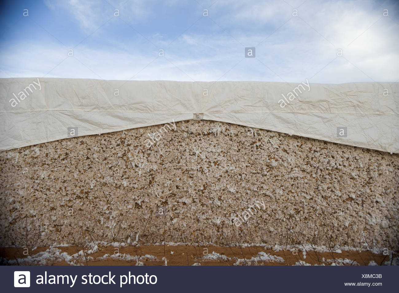 A bale of cotton covered with a tarp. - Stock Image