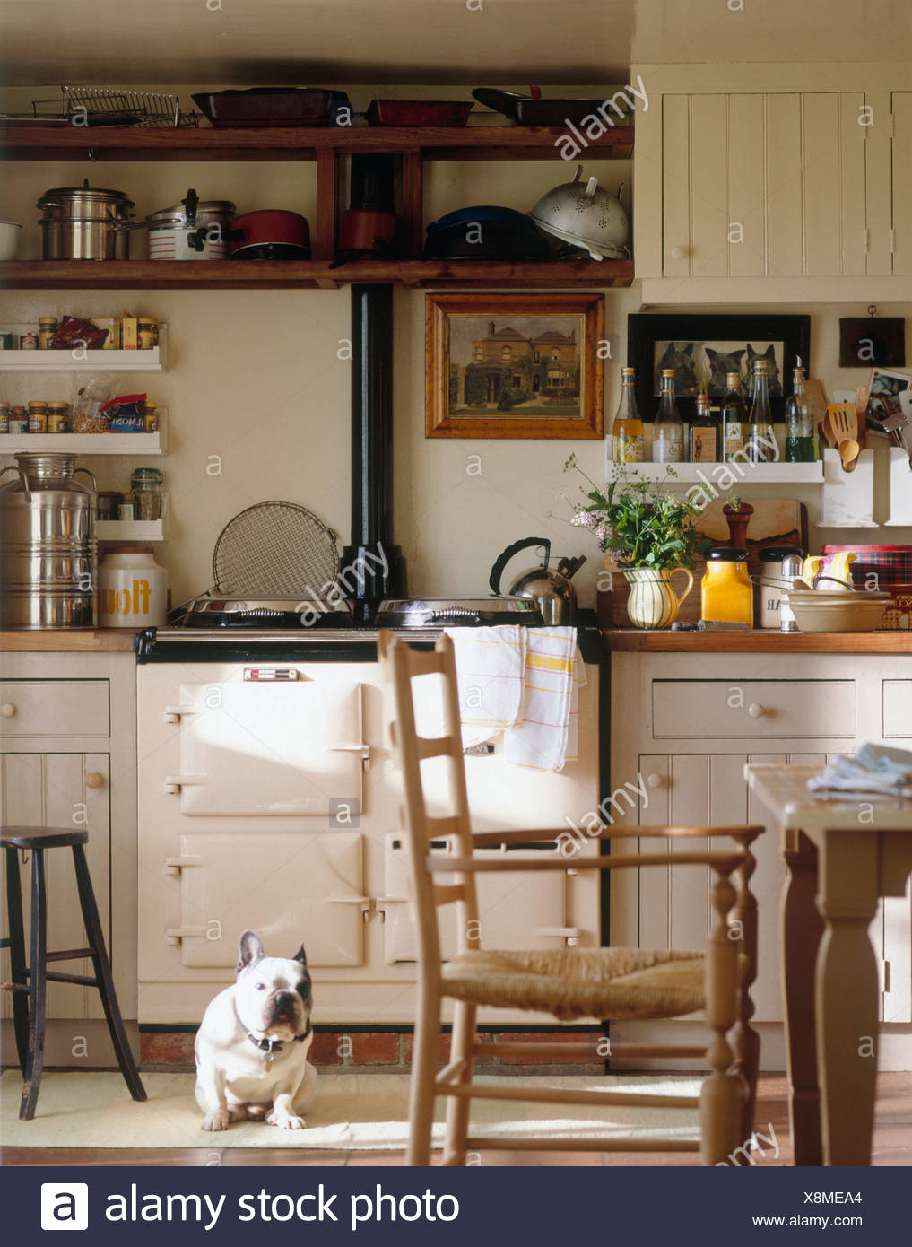Curmudgeonly Looking Pug Dog Sitting In Front Of White Aga In Country  Kitchen With Rush Seated