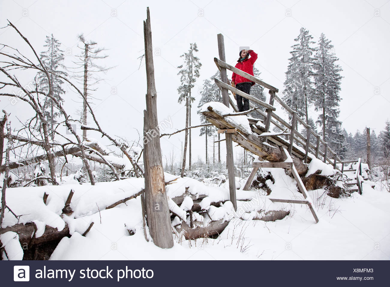 woman on snowy Kyrill path looking at storm losses, Germany, North Rhine-Westphalia, Sauerland, Schmallenberg - Stock Image