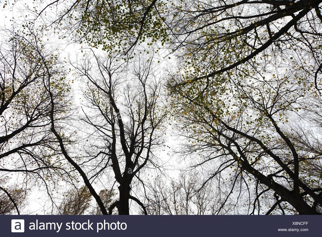 treetops in autumn Stock Photo
