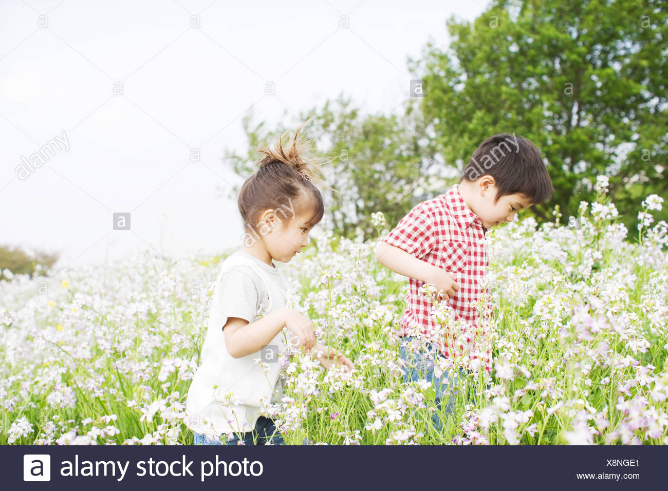 Children exploring in a field - Stock Image