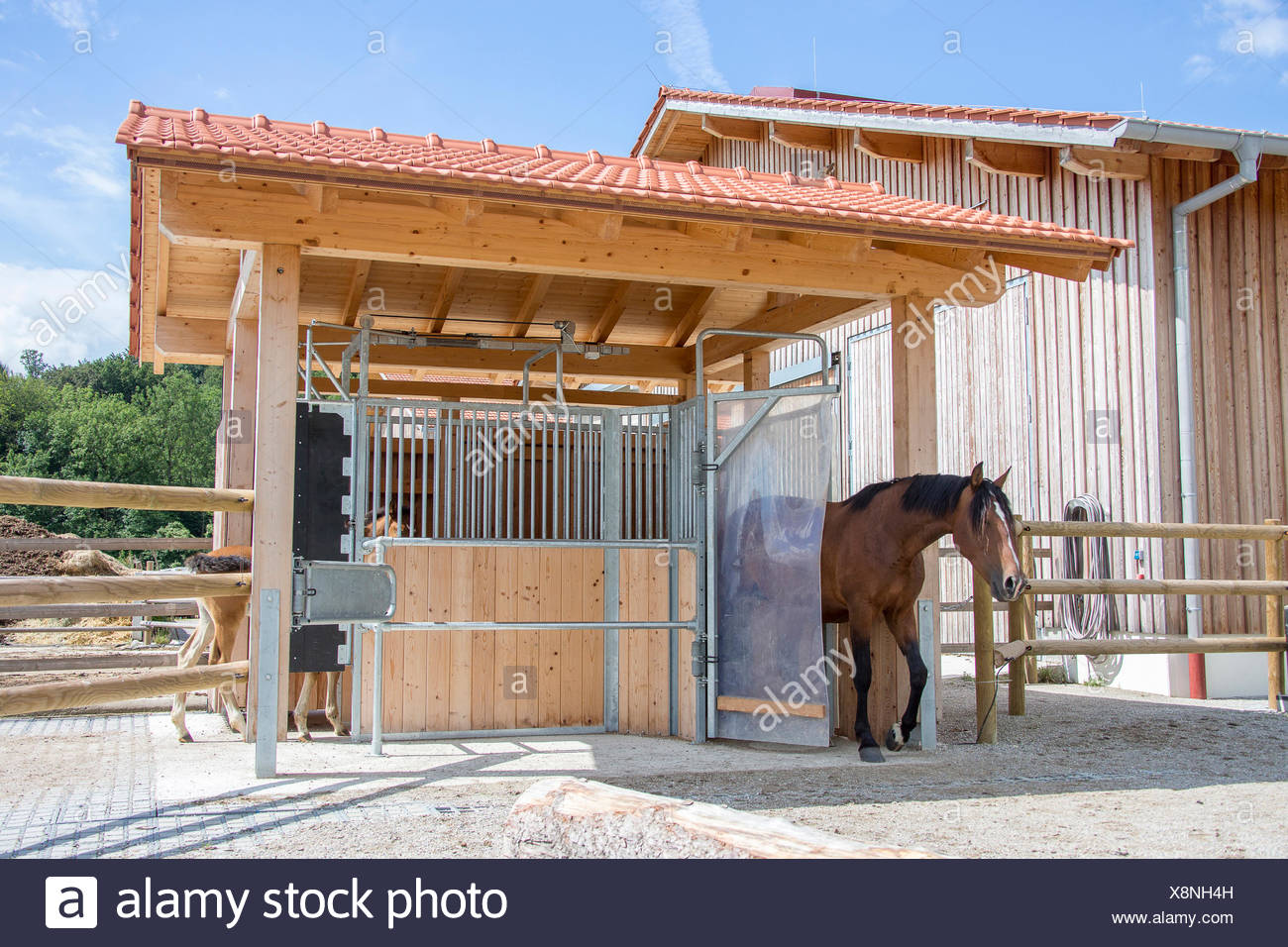 Concentrate feeder for horses - Stock Image