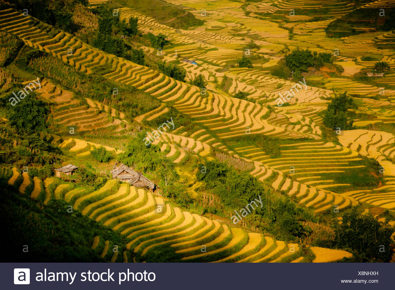 Rice paddies and mountains in mist and clouds.  Sapa, Vietnam, Asia. - Stock Image