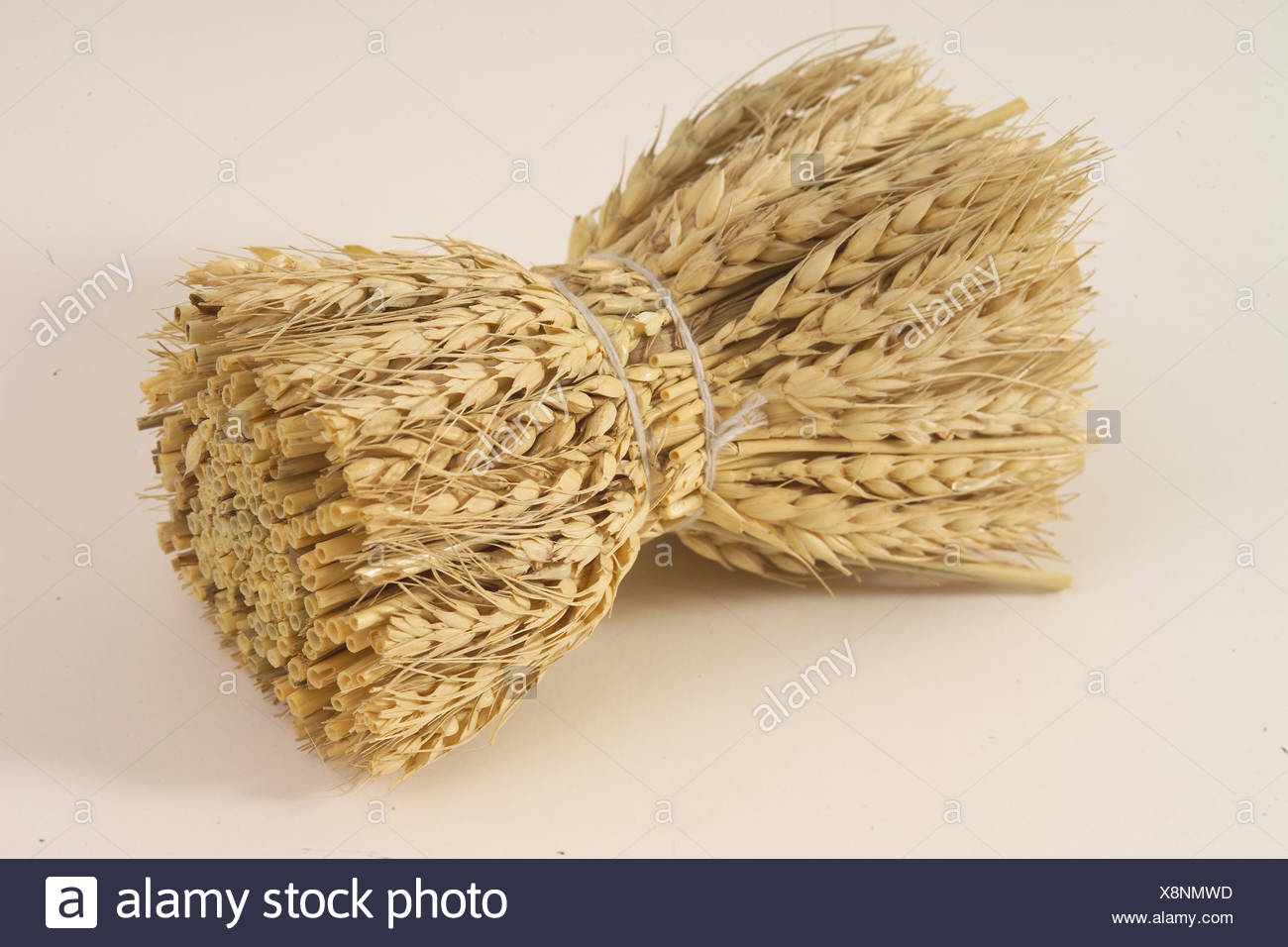 Easter Decoration - Corny Bunch - Stock Image