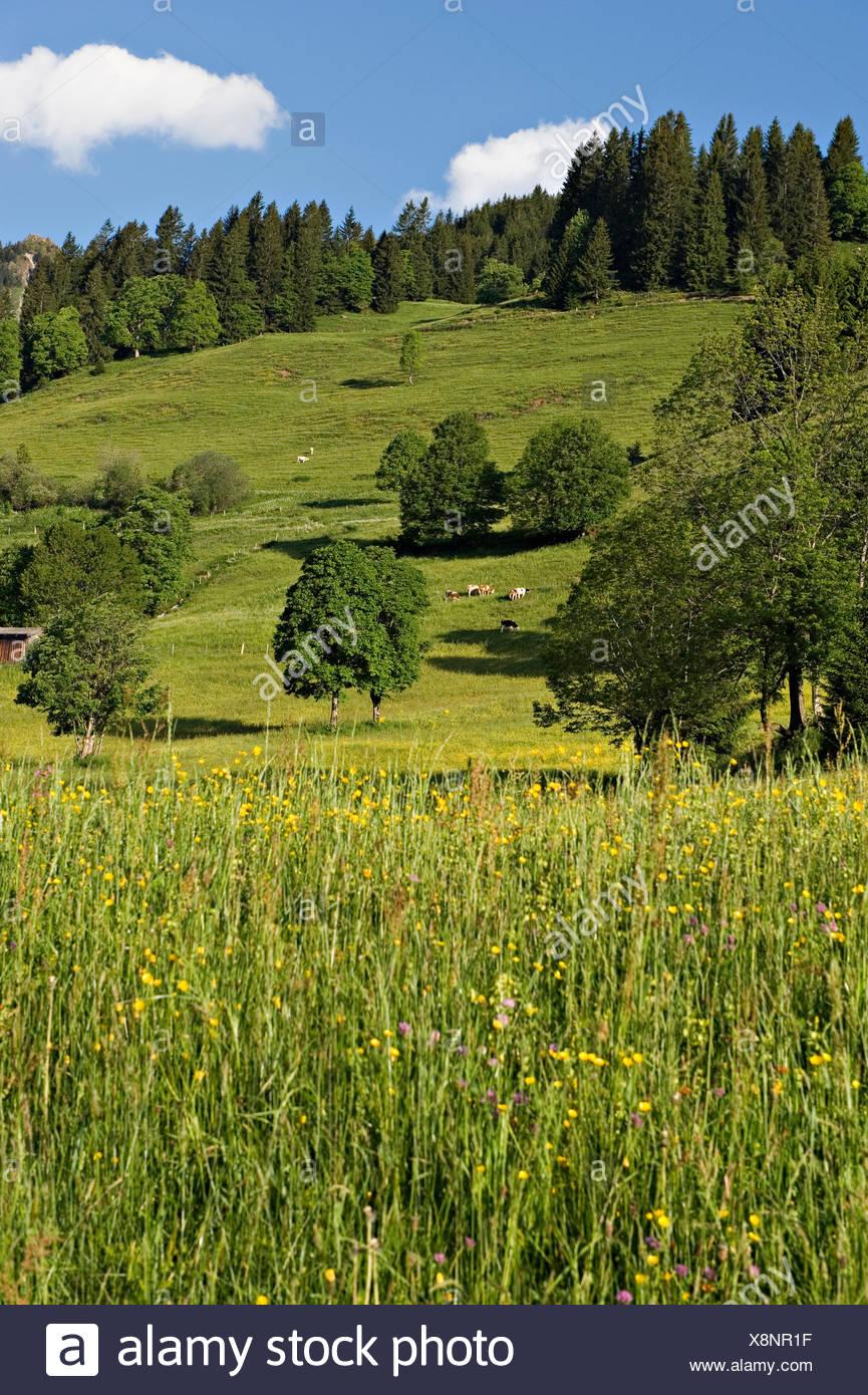 Pastureland. Gasthof Oberaigen. Kitzbuehel, Tyrol, Austria. - Stock Image