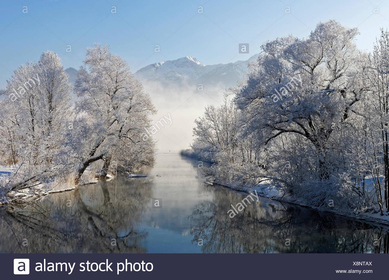Wintermorgen an der Loisach bei Kochel, BŠume mit Raureif, hinten Herzogstand, Kochel am See, Loisachtal, Oberbayern, Bayern, Deutschland, Europa Stock Photo