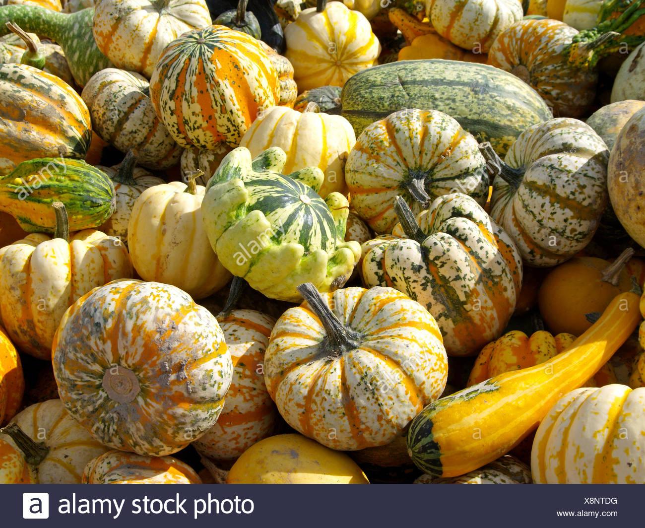 Frucht, Fruechte, Herbst, Kuerbis, Kuerbisse, Zierkuerbis, Zierkuerbisse, bunt, bunte, farbenfroh, farbig, malerisch - Stock Image
