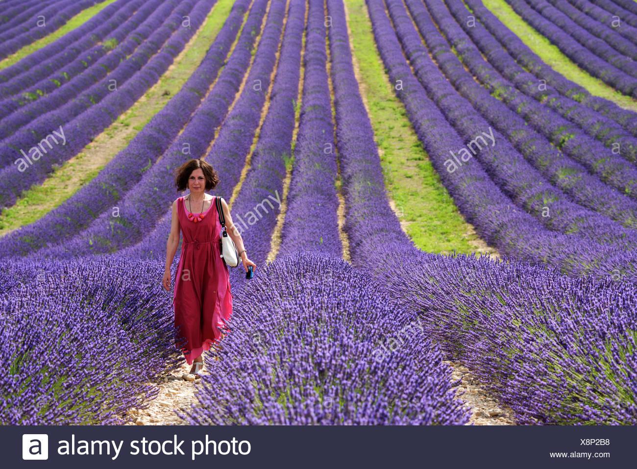 Europe, France, Provence-Alpes-Côte d'Azur, Provence, Valensole, Lavender, woman, lady, red, dress - Stock Image