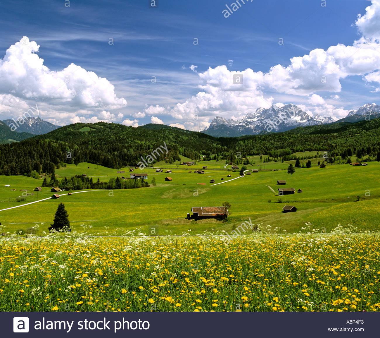 Tonihof Wildlife Park, Flower meadow in spring, Wetterstein Range, Mittenwald Forest, Upper Bavaria, Bavaria, Germany, Europe Stock Photo