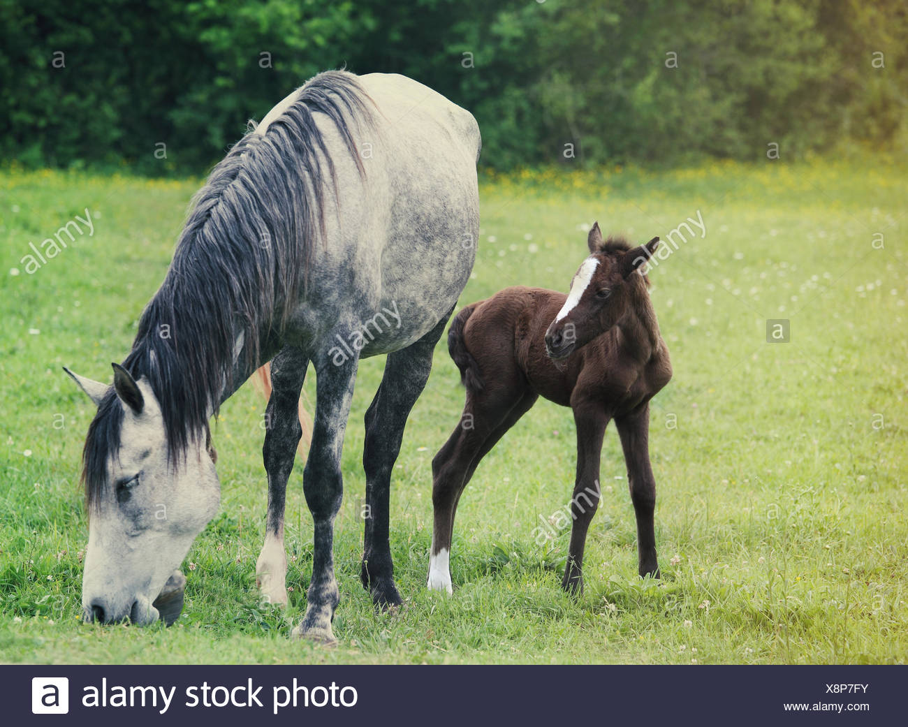 Newborn Baby Horse With Mother On The Green Grass Stock Photo Alamy