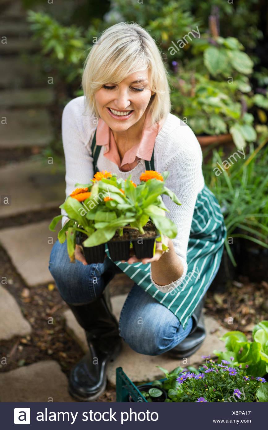 Female gardener examining potted plant - Stock Image