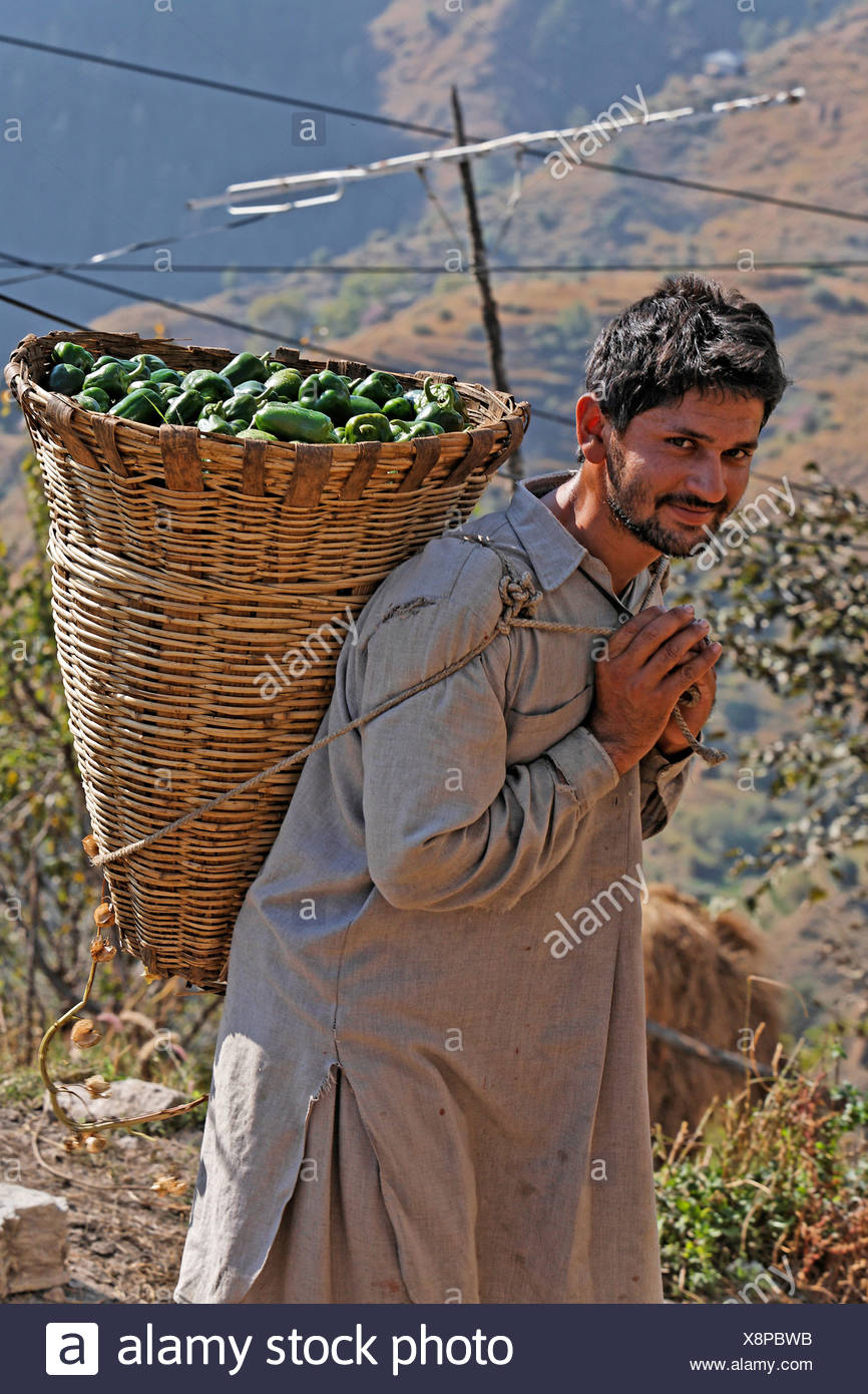 Man carrying his harvested peppers home, Matiyama, Himachal Pradesh, India - Stock Image