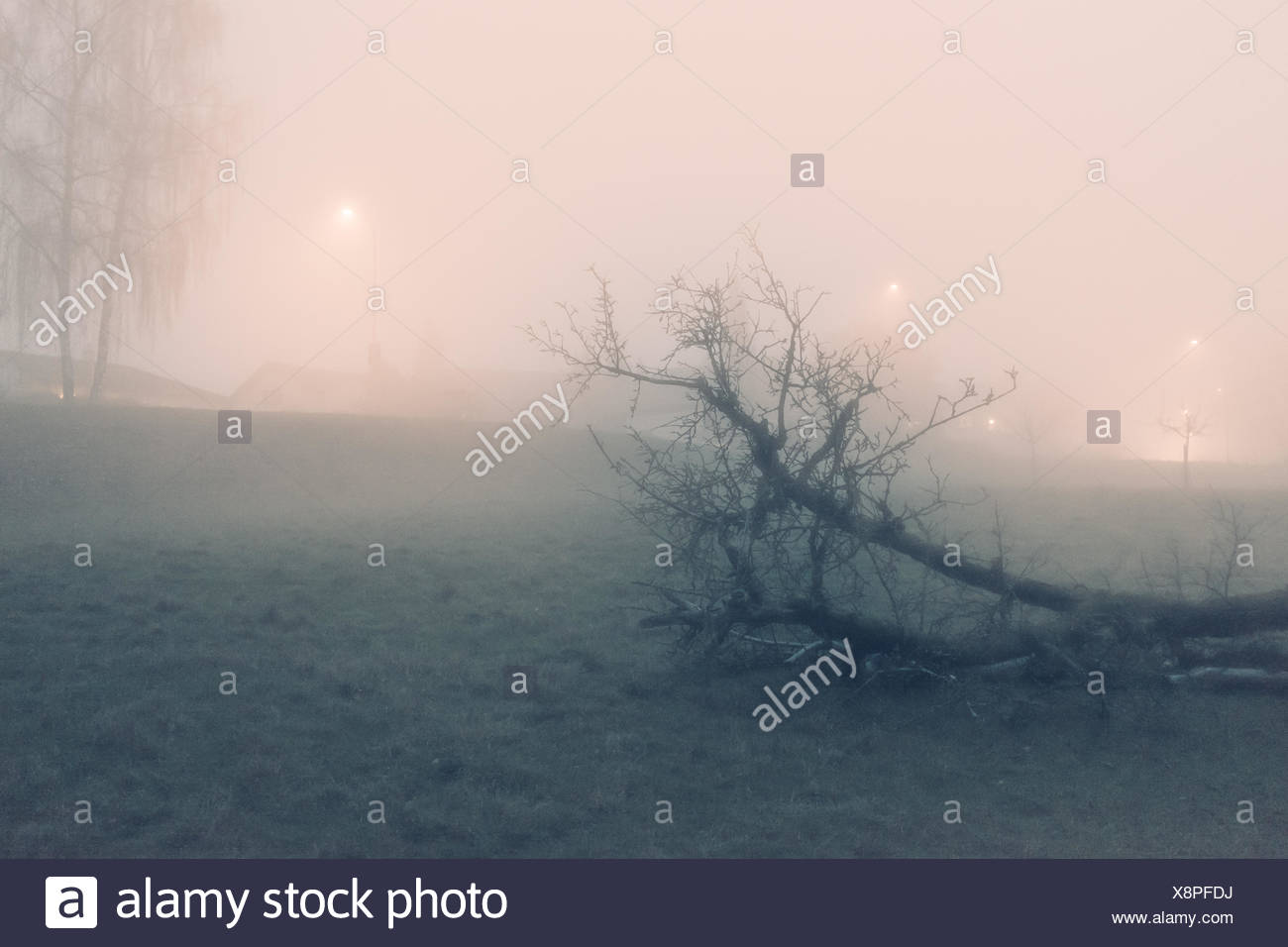 Fallen Tree On Grassy Field During Foggy Weather - Stock Image