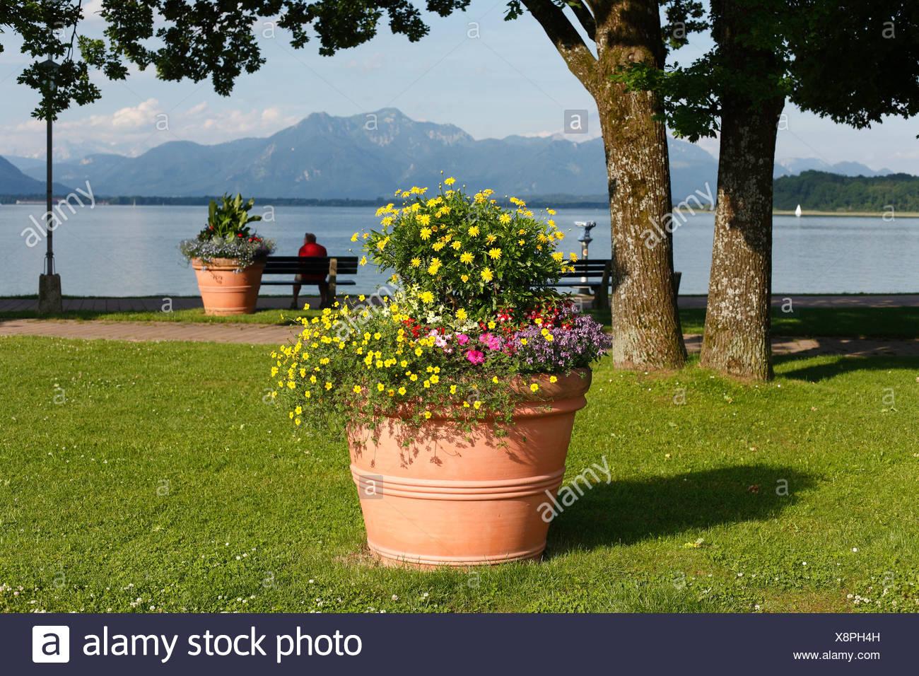Flower tub on the lakeside promenade in Prien on Lake Chiemsee, Chiemgau, Upper Bavaria, Germany, Europe Stock Photo